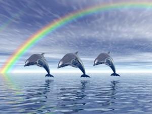 dolphin-wallpaper